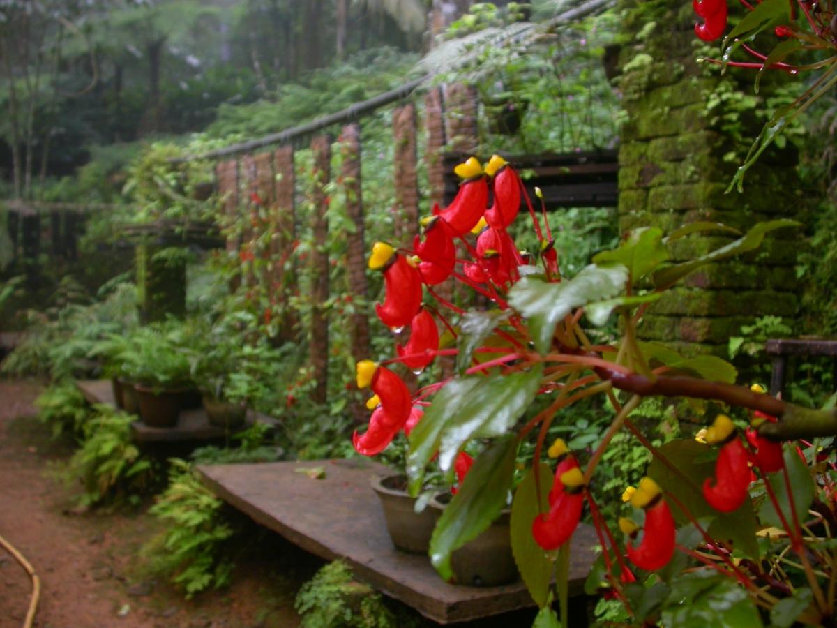 Impatiens%20flowers%20under%20cultivation10